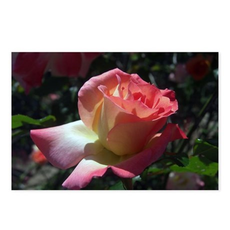 Dancing Rose Postcards (Package of 8)