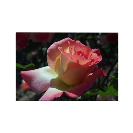 Dancing Rose Rectangle Magnet (10 pack)