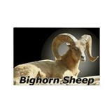 Bighorn Sheep Rectangle Magnet (10 pack)