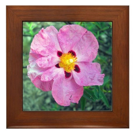 Spot Flower Framed Tile