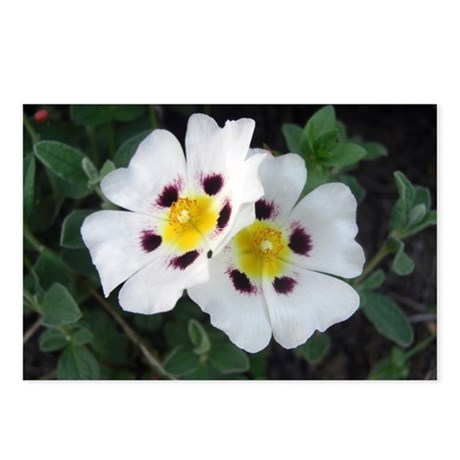 Two White Flowers Postcards (Package of 8)