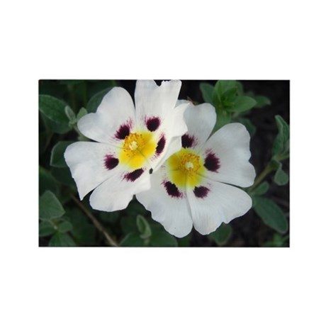 Two White Flowers Rectangle Magnet (100 pack)
