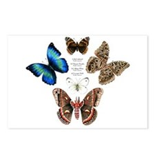 Butterfly and Moth Sampler Postcards (Package of 8