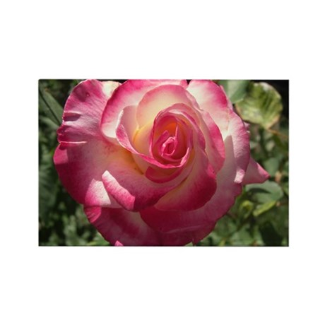 Blushing Rose Rectangle Magnet
