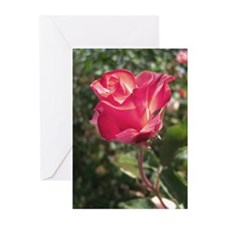 Elegant Rose Greeting Cards (Pk of 20)