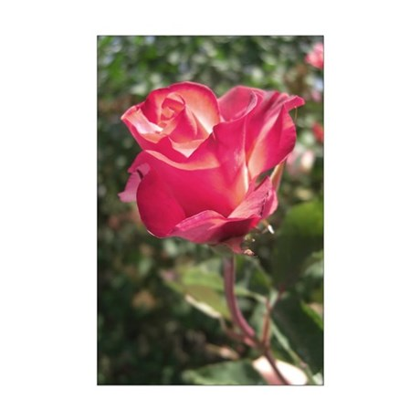 Elegant Rose Mini Poster Print