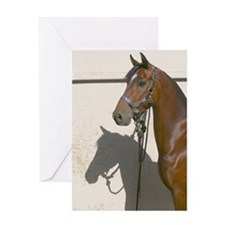 Greeting Card morgan gelding with shadow