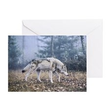 Grey Wolf - On the Prowl Greeting Cards (Pk of 10)