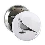 Ringneck Dove Standard 2.25