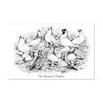 Shortface Tumbler Pigeons Mini Poster Print