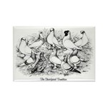 Shortface Tumbler Pigeons Rectangle Magnet (100 pa