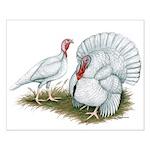 Beltsville White Turkey Small Poster