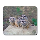 4 Meerkats Peering Mousepad