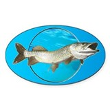 Musky Oval Decal