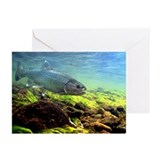 Trout Underwater - Greeting Cards (Pk of 10)