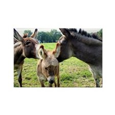 Miniature Donkey Family Rectangle Magnet