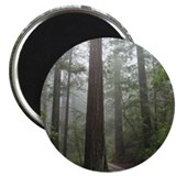 "Redwood Forest 2.25"" Magnet (100 pack)"