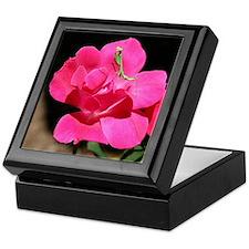 Rosy Mantis Keepsake Box