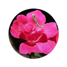 "Rosy Mantis 3.5"" Button"