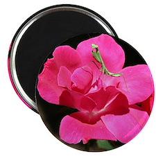 Rosy Mantis Magnet