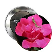 "Rosy Mantis 2.25"" Button"