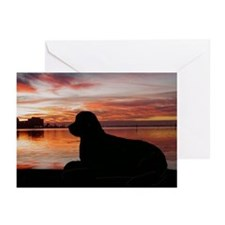 newfoundland sunset Greeting Cards (Pk of 10)