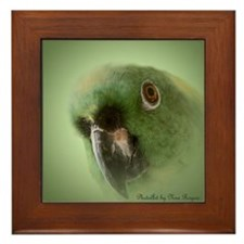 Yellow Nape Amazon Parrot Framed Tile