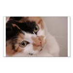 Calico Cat Rectangle Sticker 50 pk)