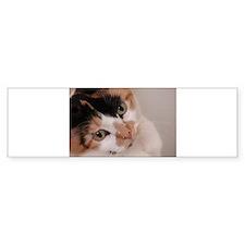 Calico Cat Bumper Sticker (50 pk)