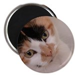 Calico Cat Magnet