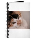 Calico Cat Journal