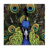 Peacock Drink Coaster