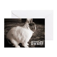 Netherland Dwarf Greeting Cards (Pk of 20)