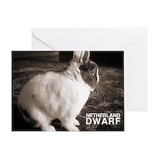Netherland Dwarf Greeting Card
