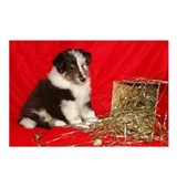 Sheltie Pups Holiday Greeting Postcards (Package o