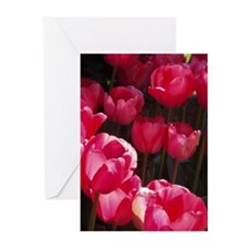 Raspberry Tulips Greeting Cards (Pk of 20)