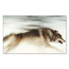"""""""Running Wolf"""" Rectangle Decal"""