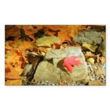 Fall Colors Red Leaf Rectangle Decal
