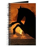 Sunset Rearing Arabian Journal