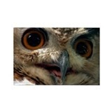 Mysterious Owl! Rectangle Magnet (10 pack)