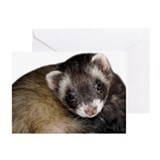 Cute Ferret Face Greeting Cards (Pk of 20)