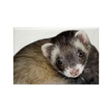Cute Ferret Face Rectangle Magnet