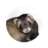 "Cute Ferret Face 3.5"" Button"