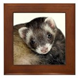 Cute Ferret Face Framed Tile
