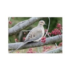 Mourning Dove Rectangle Magnet (10 pack)