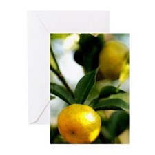 Lemon Tree Greeting Cards (Pk of 10)