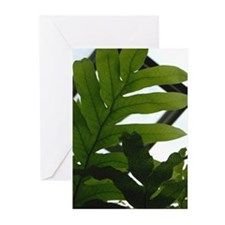 Fern Detail Greeting Cards (Pk of 10)