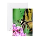 Swallowtail Greeting Cards (Pk of 10)