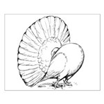 Fantail Pigeon Small Poster