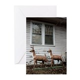 Unique Unusual Greeting Cards (Pk of 10)